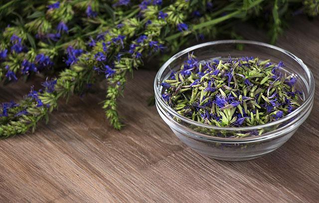 Как заваривать траву иссоп при климаксе у женщин